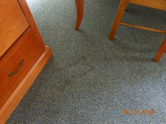 Dolphin Inn: nasty carpet