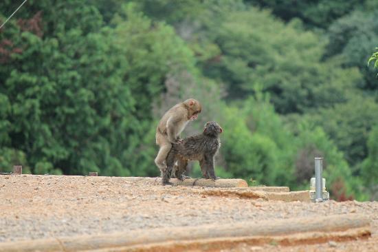 sign - Picture of Monkey Park Iwatayama, Kyoto - TripAdvisor