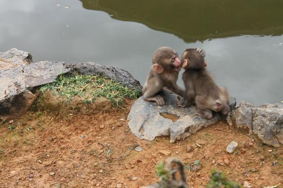 Monkey Park in Arashiyama - Picture of Monkey Park ...