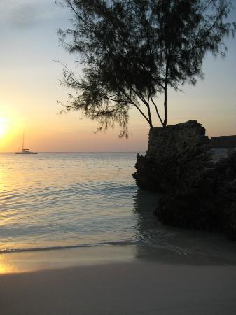 فليم تري كوتدجيز: Sunset on the beach 