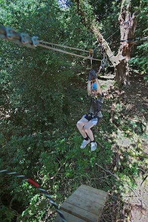 Killarney High Ropes Course : Ziplining high above the forest floor
