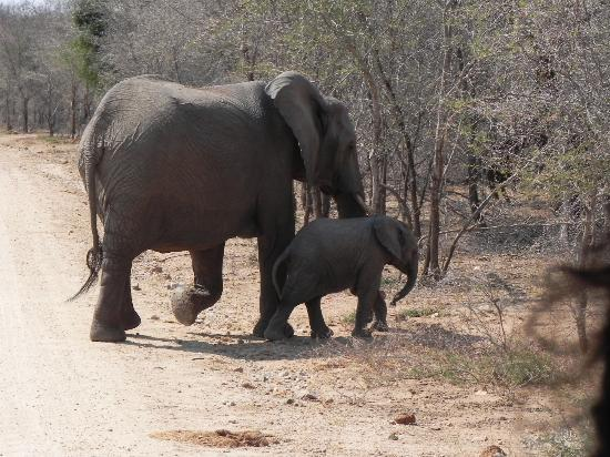 Tydon Safari Camp: Elephants spotted in Kruger