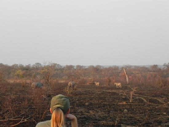 Tydon Safari Camp: Drive in Sabi Sands