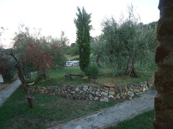 Villa Dini: Devant l'appartement, le terrain et ses nombreux oliviers