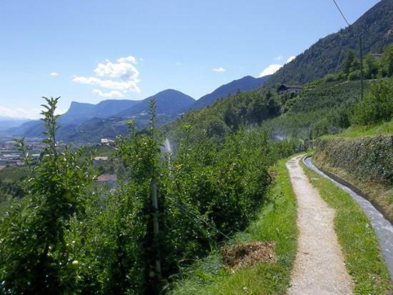 Merano, Italy: frutteto