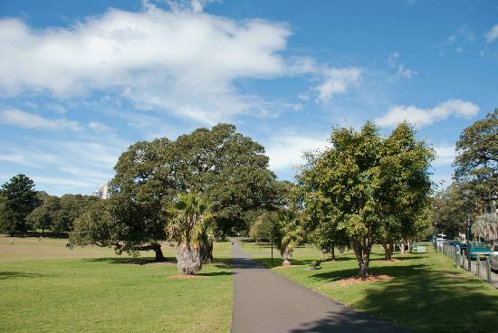 pathway through the park picture of the domain sydney. Black Bedroom Furniture Sets. Home Design Ideas