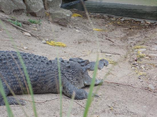 Shoalhaven Zoo: Great croc show