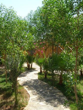 دايف أرج: Dive Urge central garden 