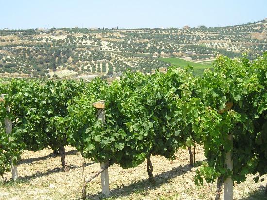 Boutari Winery 사진
