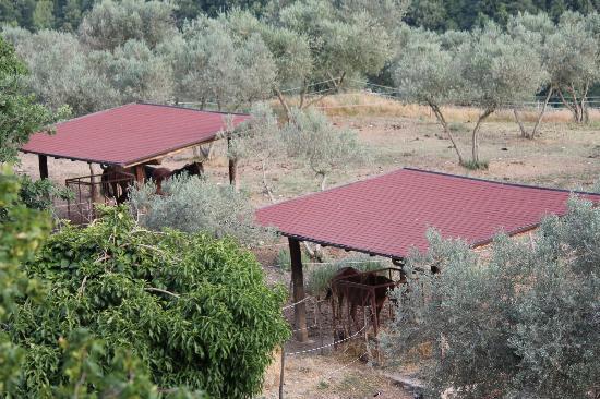 Agriturismo Valle Capore: cavalli