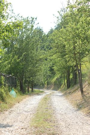 Agriturismo Valle Capore: viale ingresso