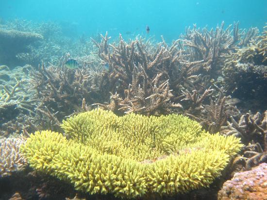 Karimunjawa, Indonesia: terumbu karang yang indah di taman laut karimun jawa