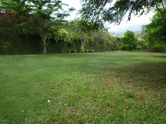 Vanda Gardenia: lapangan
