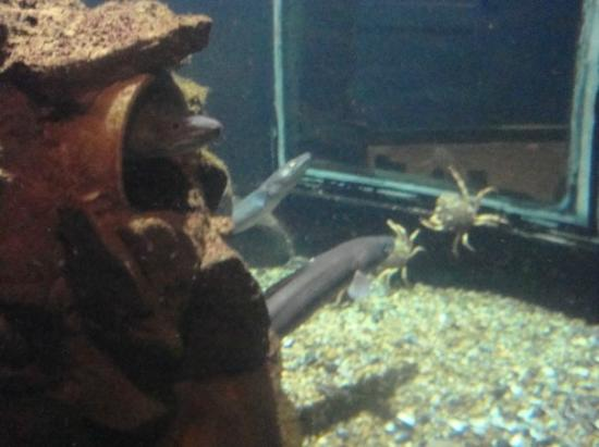 anglesey sea zoo - Bild von Anglesey Sea Zoo Sw Mor Mon, Brynsiencyn ...