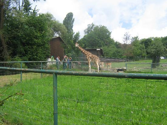 Kronberg im Taunus, Germany: Giraffen Gehege