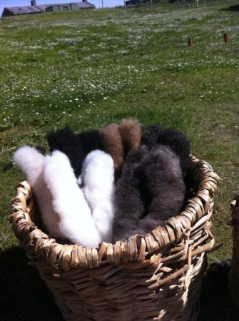 Old Scatness: wool for spinning