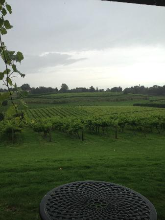 Three Choirs Vineyards: Lush vineyard view.