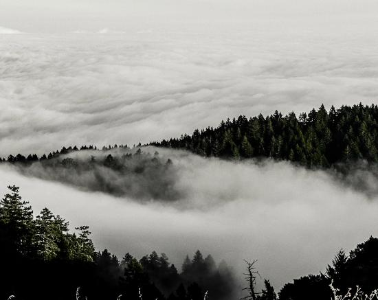 Mill Valley, Californien: Above the fog.
