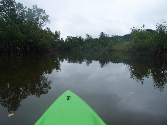 Kedas Lodge: Trip in the Mangroves