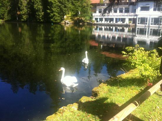 Hotel Langenwaldsee: View onto hotel