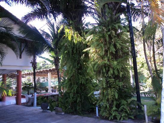Resort Pau Brasil Praia: Área