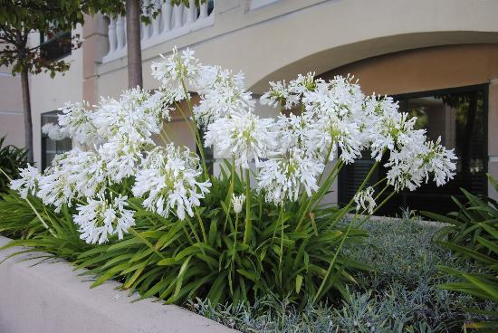 Best Western Coyote Point Inn: Friendly flowers. :)