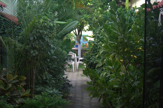 La Casa Lorenzo: Lush vegetation welcomes you.