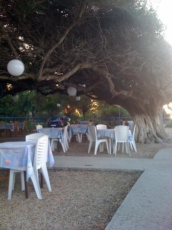 panorama tavern under a beautiful tree