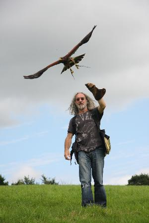West of England Falconry: Jay and his halk