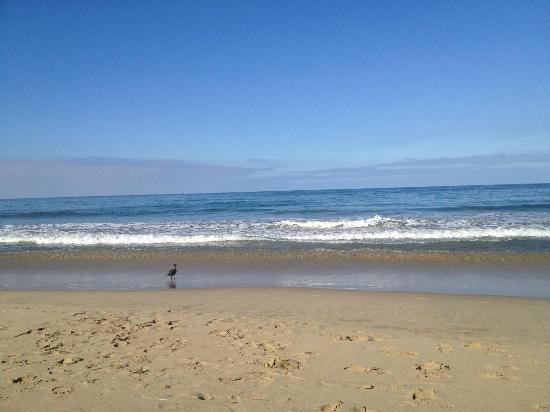 Manhattan Beach, CA: Beautiful and peaceful away from the volleyball tournament