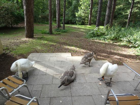Sherwood Villa >> Sherwood Villa View And Wildlife Picture Of Center Parcs Sherwood