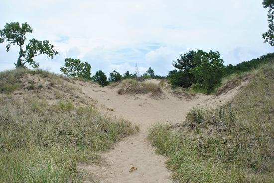 Saugatuck Dunes State Park: looking back toward the hiking trail from the beach
