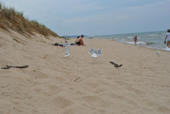 Saugatuck Dunes State Park: looking south