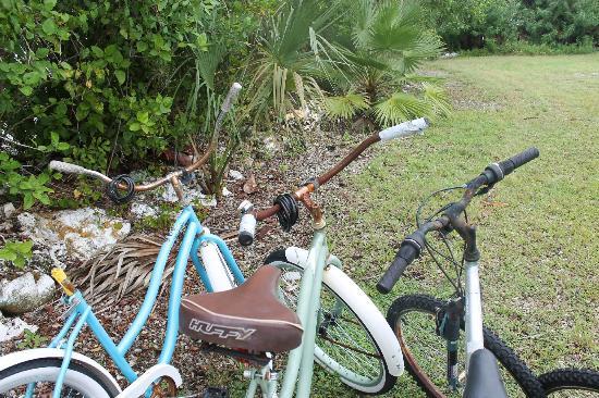 Pyramids in Florida: les vélos d'époque
