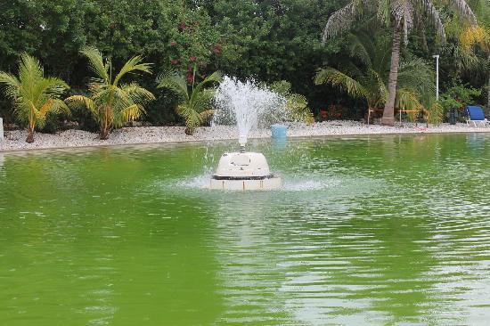 Pyramids in Florida: le lagon