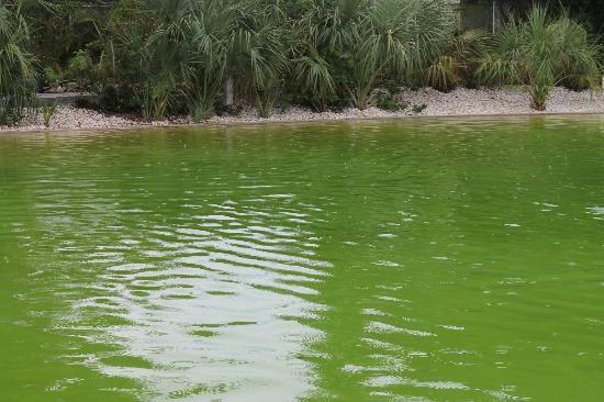 Pyramids in Florida: piscine !!!