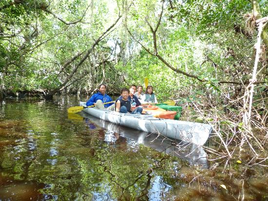 Tour the Glades - Private Wildlife Tours: Mangrove forest