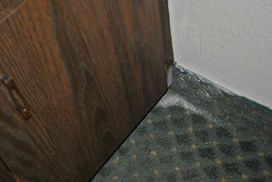 Olympia Resort: Hotel, Spa & Conference Center: Filth in the corner of the carpet next to refridgerator
