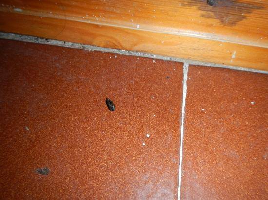 Aurum Sabbie Bianche: Feci di topo o come dicono loro di geco