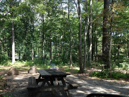 French Creek State Park: Beautiful spacious sites