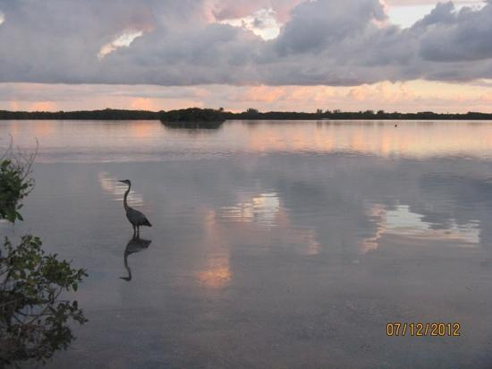Fort de Soto Park Campground: view from my camp site