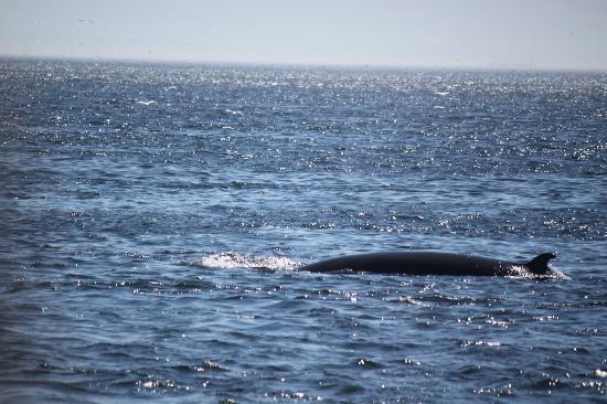 Croisières 2001 : Blizzard the whale