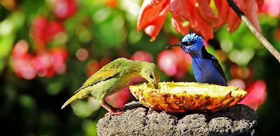 Boquete Garden Inn: Enjoy breakfast with the birds!