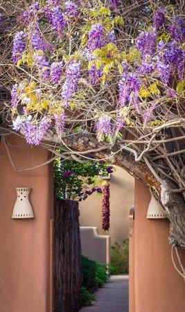 Inn on the Alameda wisteria
