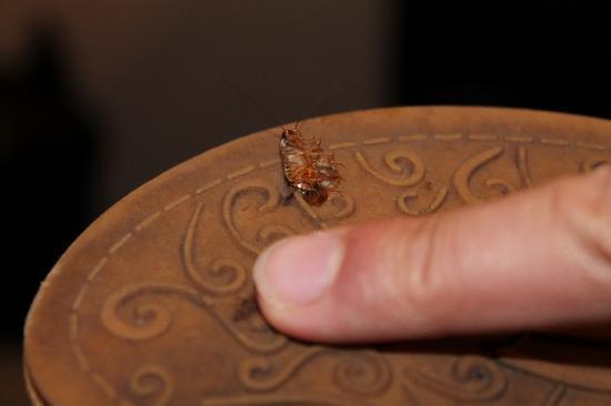 Best Western Plus Virginia Beach: Cute little roach that we found/killed.