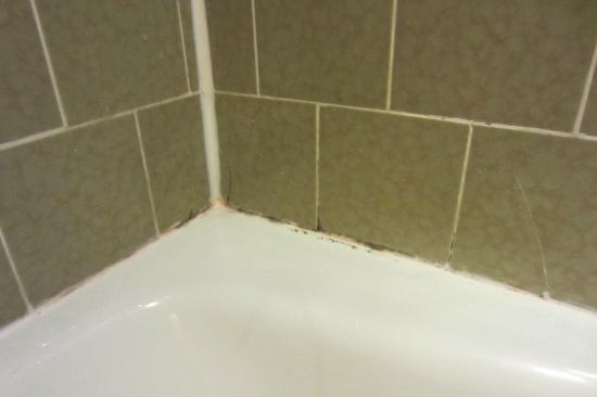 Red Lion Hotel Eureka: more mold in the shower