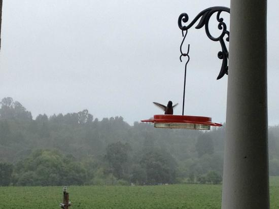 The Raford Inn Bed and Breakfast: Hummingbird