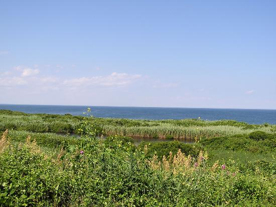 The Sea Breeze: View from the cottage