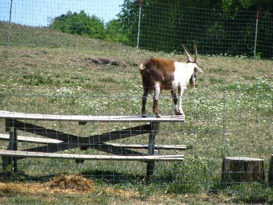 Yoder's Amish Home: Ready, Set, Jump!