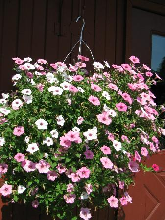 Yoder's Amish Home: Flowers Everywhere!